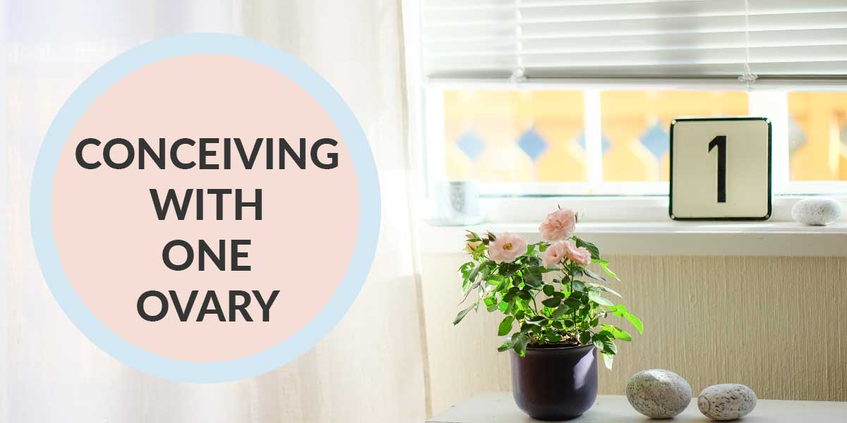 Tips For Conceiving With Just One Ovary In The Stork Otc Blog