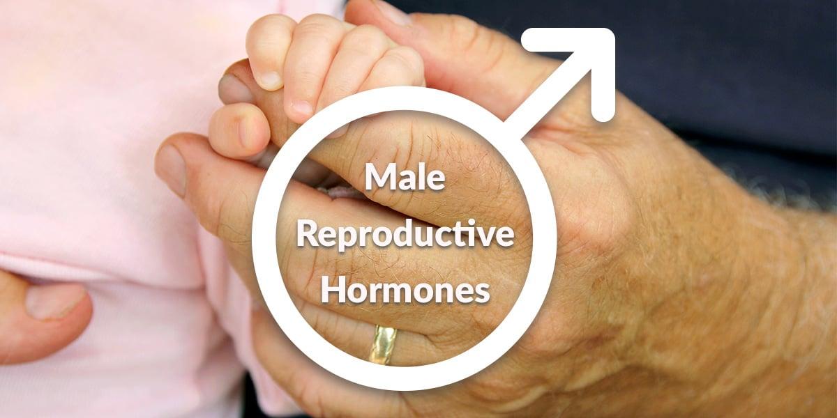 male hormones affect fertility